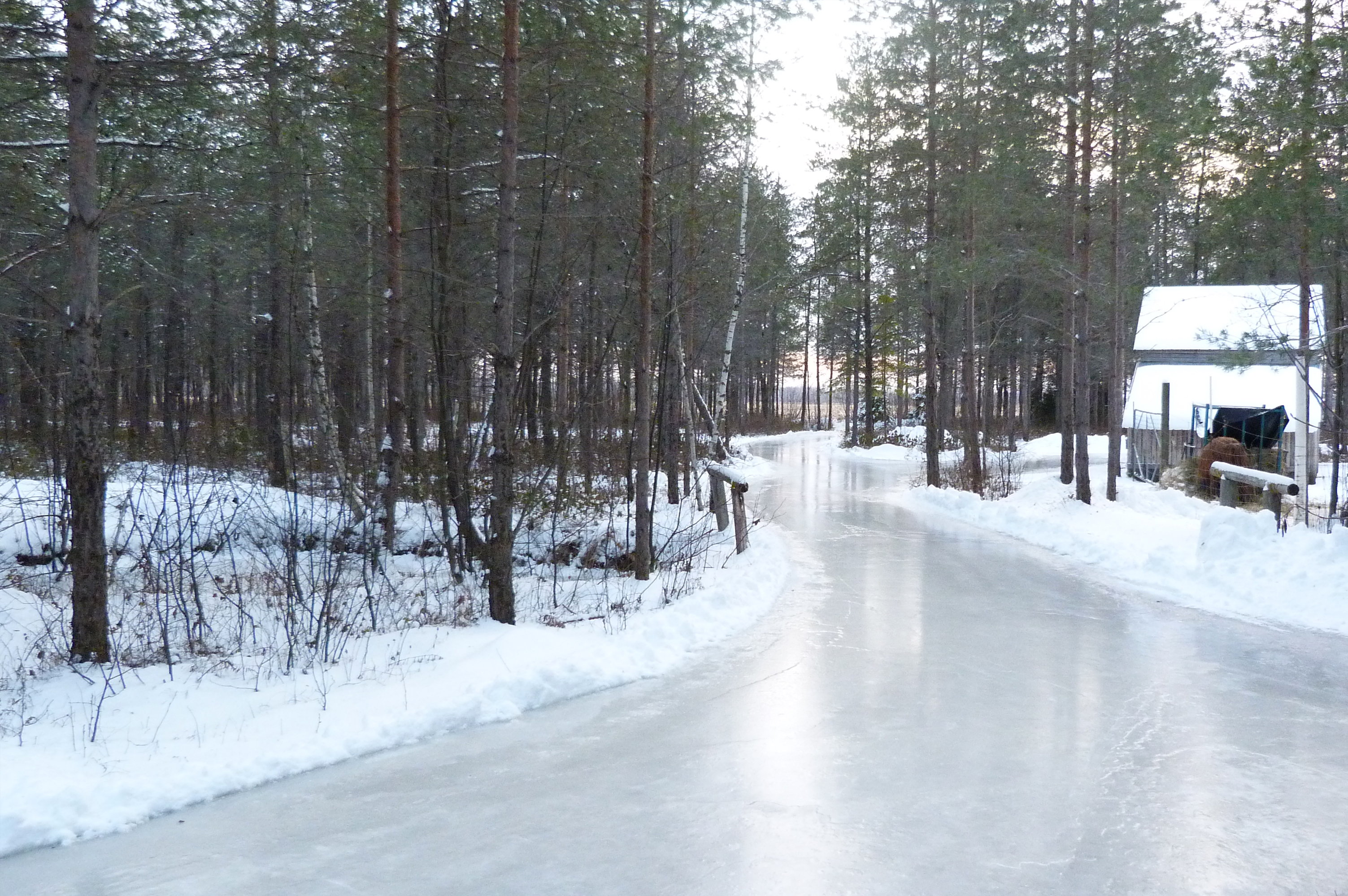 patin foret perdue